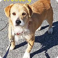 Adopt A Pet :: Wesley-VIDEO! - Griffin, GA