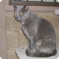 Adopt A Pet :: Opal - Ruidoso, NM