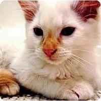 Adopt A Pet :: Chai - Irvine, CA