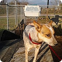 Adopt A Pet :: Dot - Linden, TN