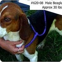 Adopt A Pet :: I.D. # 620-08 - RESCUED! - Zanesville, OH