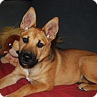 Adopt A Pet :: Heather - Hagerstown, MD