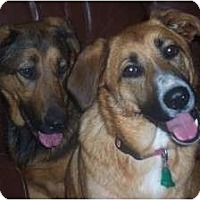 Adopt A Pet :: Sadie & Rosie~ Essex Jct.,VT - New Boston, NH