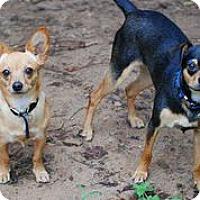 Adopt A Pet :: Chico & Farley - Austin, TX