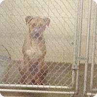 Adopt A Pet :: #461-14 @ Animal Shelter - Zanesville, OH