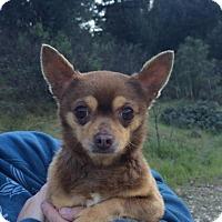 Adopt A Pet :: Winchester - Reno, NV
