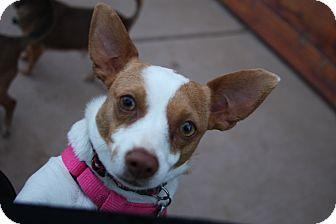 Terrier (Unknown Type, Small) Mix Dog for adoption in Tehachapi, California - Reba