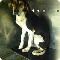 Adopt A Pet :: TWC - Upper Sandusky, OH