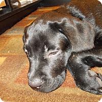 Adopt A Pet :: Junior