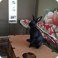 Adopt A Pet :: Walter - Columbus, OH