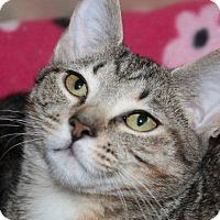 Adopt A Pet :: Ava @ Roswell Petsmart - McDonough, GA