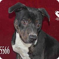 Adopt A Pet :: Buddy - Tracy, CA