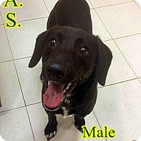 Adopt A Pet :: 1-6 Trey - Triadelphia, WV