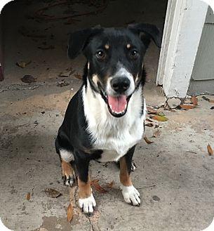 Biloxi | Adopted Dog |...