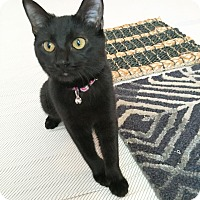 Adopt A Pet :: Petula - Arlington/Ft Worth, TX