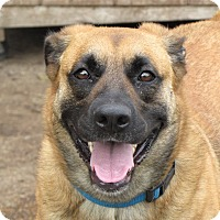 Adopt A Pet :: Lexi - West Hartford, CT