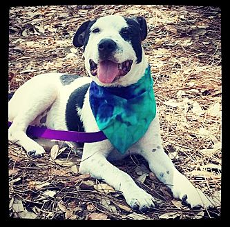 Pointer Mix Dog for adoption in Grand Bay, Alabama - Lenny
