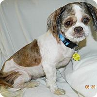 Adopt A Pet :: Derby - Umatilla, FL