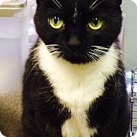 Adopt A Pet :: Heidi - Chattanooga, TN