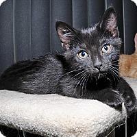 Adopt A Pet :: Rerun - Mississauga, Ontario, ON