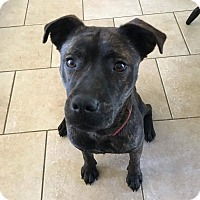 Adopt A Pet :: Peny - Uxbridge, MA