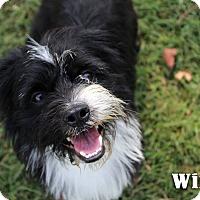 Adopt A Pet :: Wink - Texarkana, AR