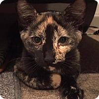 Adopt A Pet :: Tammi - Frankfort, IL