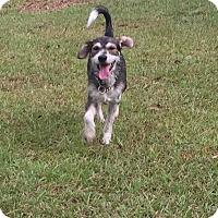 Adopt A Pet :: Percy - Vidor, TX