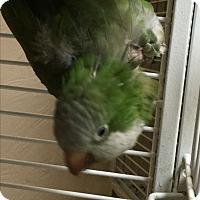 Adopt A Pet :: Jojo - Punta Gorda, FL