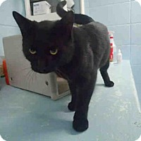 Adopt A Pet :: ASVIN - Tallahassee, FL