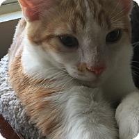 Adopt A Pet :: Alix - Santa Ana, CA
