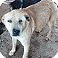Adopt A Pet :: old man - springtown, TX