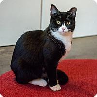 Adopt A Pet :: Pippin - New York, NY