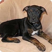 Adopt A Pet :: Rikki - Bedminster, NJ
