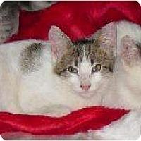 Adopt A Pet :: Lewis - Schertz, TX