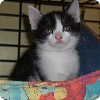 Adopt A Pet :: Radar - Acme, PA
