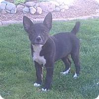Adopt A Pet :: Kiara - Phoenix, AZ