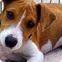 Adopt A Pet :: Dobby - Miami, FL