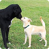 Adopt A Pet :: Jennifer - Brattleboro, VT