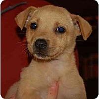 Adopt A Pet :: Jolie - Chula Vista, CA