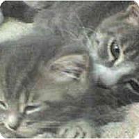 Adopt A Pet :: Sunshine - Island Park, NY