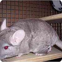 Adopt A Pet :: #4 Louis - Avondale, LA
