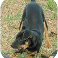 Adopt A Pet :: Bambi - Jacksonville, FL