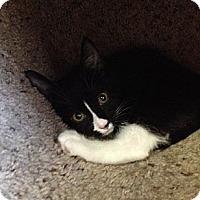 Adopt A Pet :: Jill & Tina - Island Park, NY