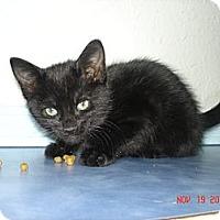 Adopt A Pet :: Velvet - Stilwell, OK