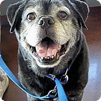 Adopt A Pet :: Sarge - Chandler, AZ