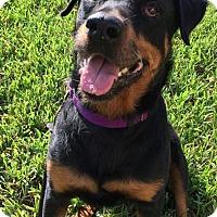 Adopt A Pet :: Noel - Seffner, FL