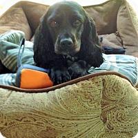 Adopt A Pet :: Tammy-ADOPTED! - Sacramento, CA