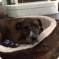 Adopt A Pet :: SASHA (Courtesy Post) - LOS ANGELES, CA