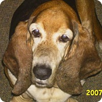Adopt A Pet :: Duke - Fort Lauderdale, FL